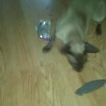 Loki + Sardine