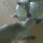 Skye & Loki