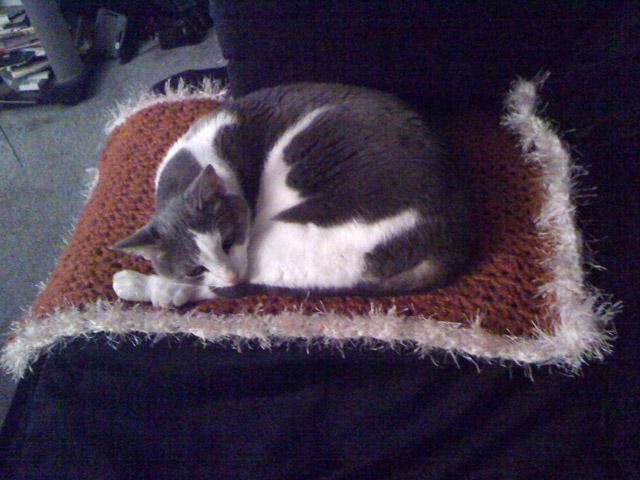 Dijjit using the blanket.