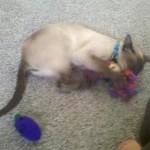 Loki attacks!