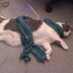Dijjit models the unblocked scarf.